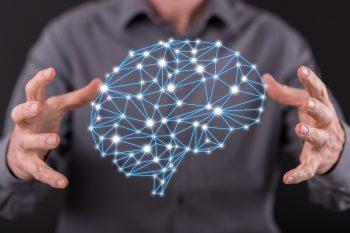 Нервная система: строение и функции