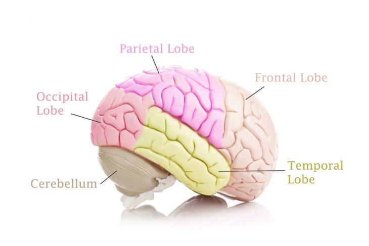 гормоны мозга