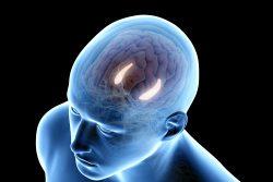Гиппокамп – это отдел мозга: где находится и за что отвечает